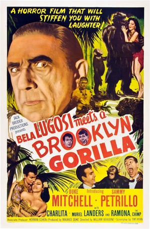 SassyFlix | Bela Lugosi Meets a Brooklyn Gorilla