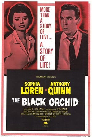 SassyFlix | The Black Orchid